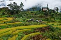 Bhutan rice steps